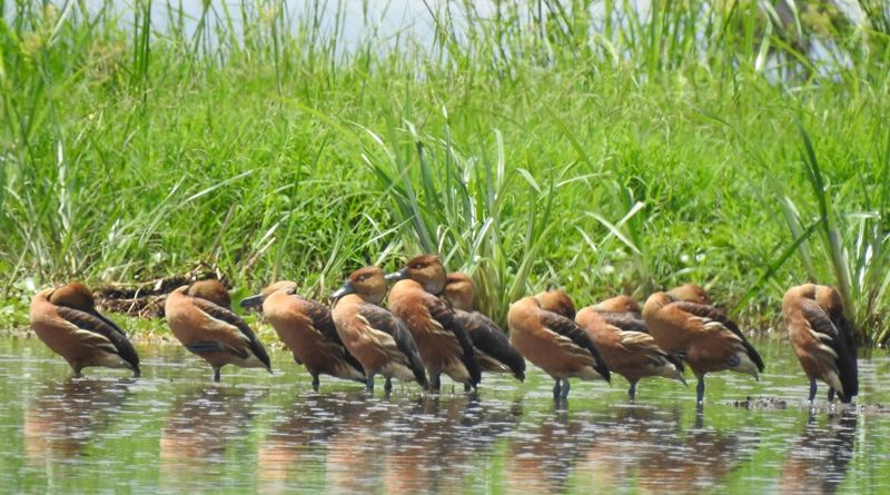 Mara wetland: Birds sing in their habitat: How Birdlife's conservation efforts make birds and humans coexist in Mara region