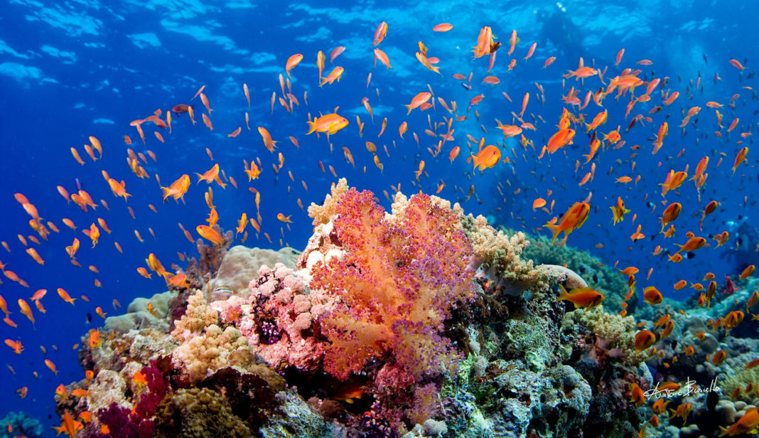 Coral Reefs of the Red Sea – Hanging In There!