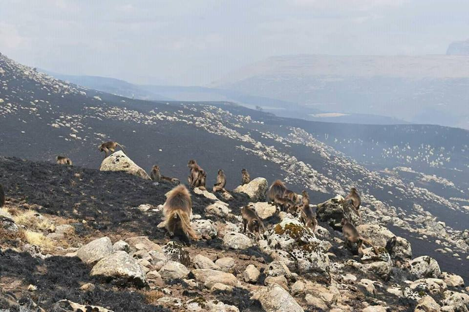 Uncontrolled wildfire burns Ethiopia's Simien Mountains National Park