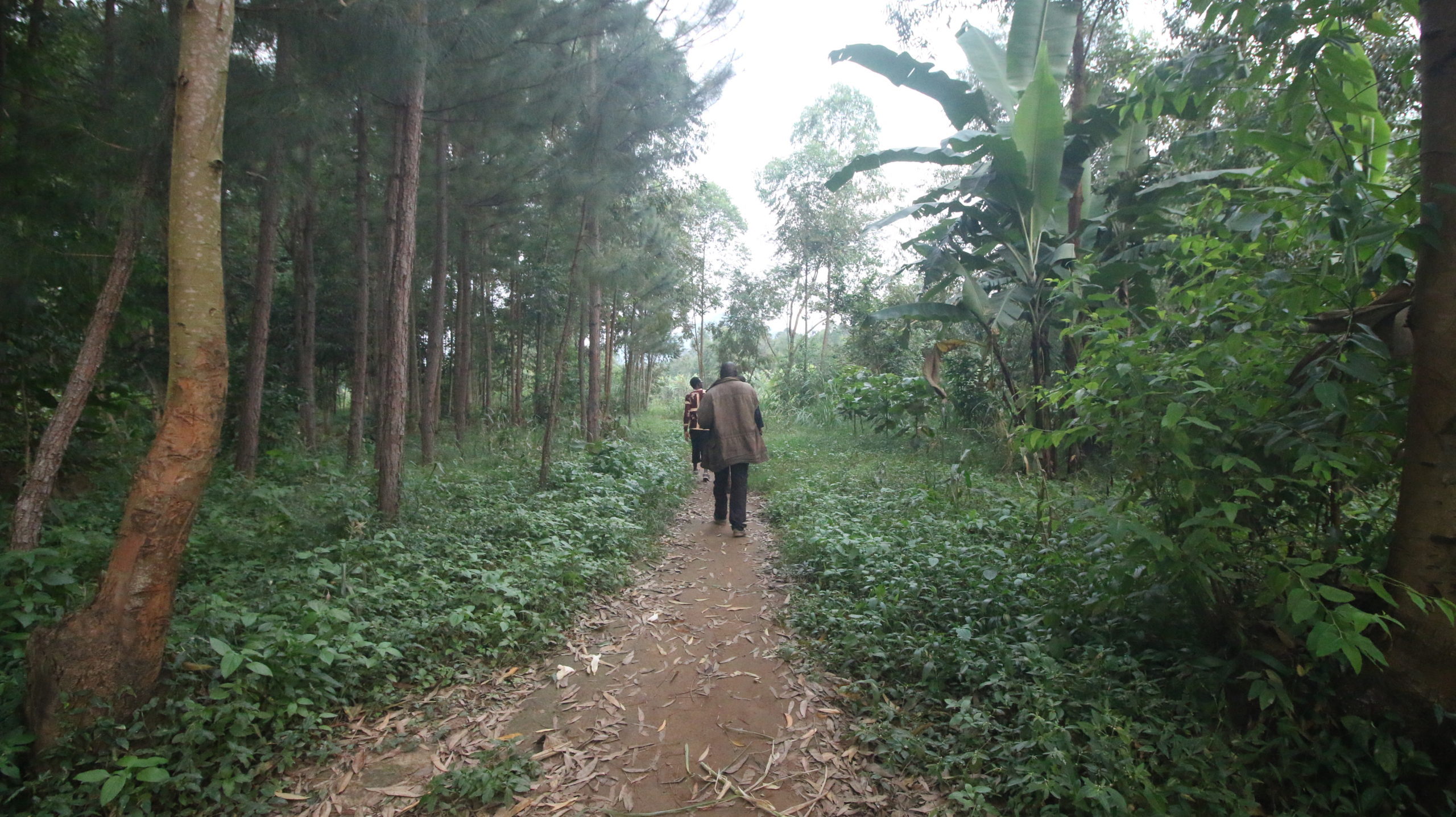 Mt. Elgon Landslides Survivors Plant 30,000 Trees through a Village Savings Group to Fight Climate Change